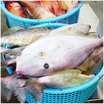 鎌倉魚市場画像